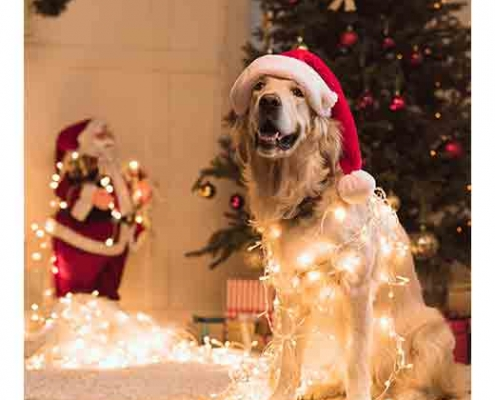 dog with Christmas lights